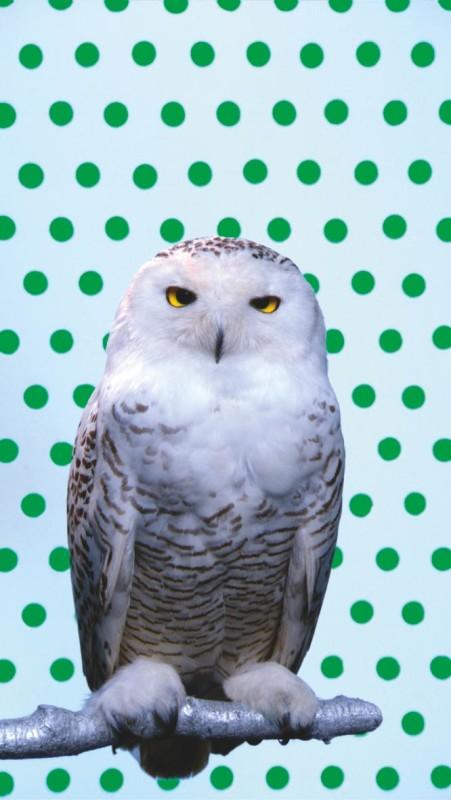 Robert Wilson, KOOL, Snowy Owl - Green 2006 RW WorkRobert Wilson, KOOL, Snowy Owl - Green 2006 RW Work
