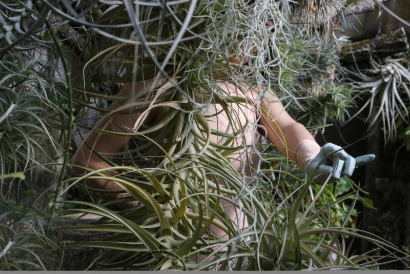 Glam out of Plant_Herbarium_A.I. Artigianal Intelligence_Altaroma_ Clara Tosi Pamphili_Alessio de'Navasques