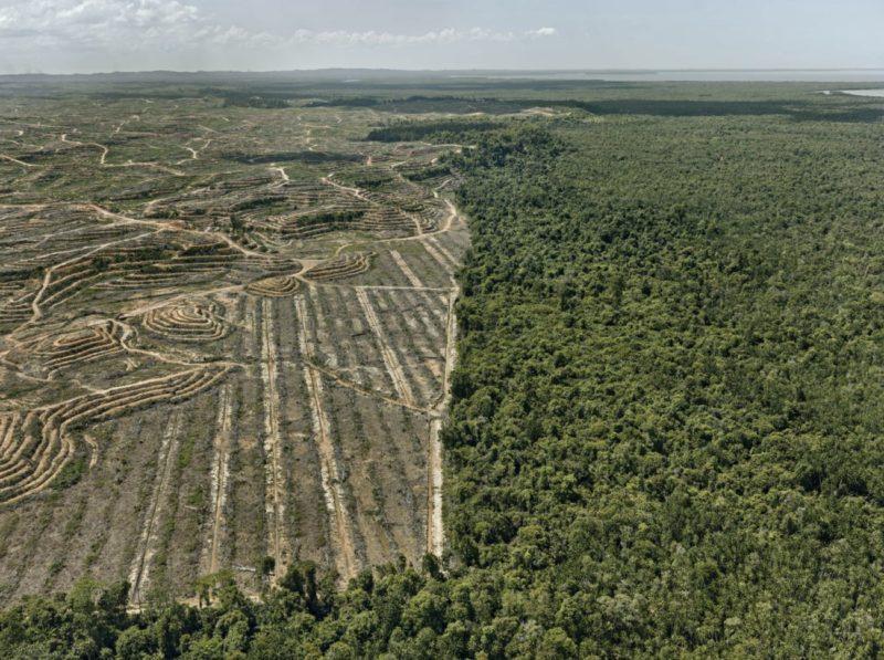 Anthropocene_Photo by Edward Burtynsky_Clearcut #1, Palm Oil Plantation, Borneo, Malaysia 2016_Courtesy Admira Photography, Milan / Nicholas Metivier Gallery, Toronto
