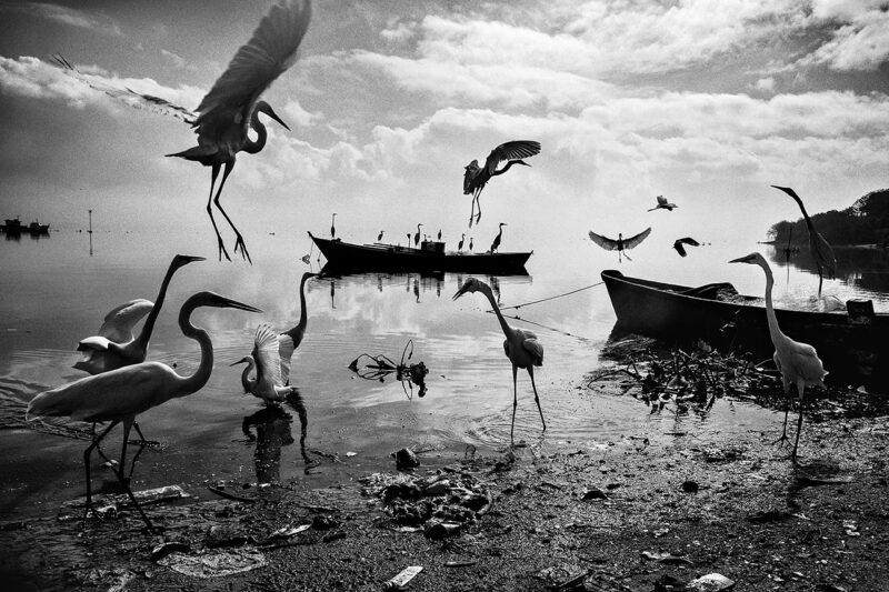 Looks On The World_Festival of Ehtical Photography 2020 © Dario De Dominicis
